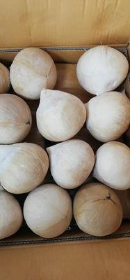 海南省海口市龙华区泰国香水椰 1 - 1.5斤