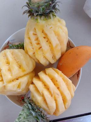 云南省红河哈尼族彝族自治州河口瑶族自治县香水菠萝  2 - 2.5斤 有的可重达四斤