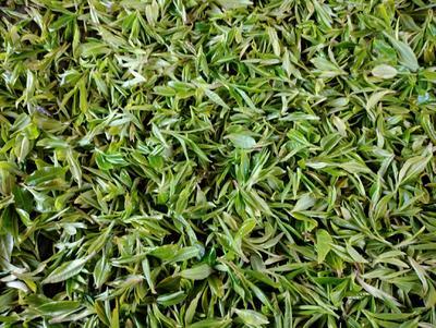 这是一张关于云南绿茶 一级 散装 的产品图片