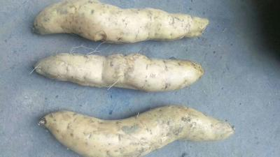 这是一张关于番薯 混装通货 红皮 的产品图片