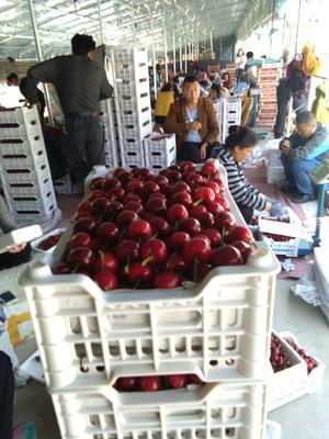 这是一张关于大樱桃 26-28mm 15-18g 的产品图片