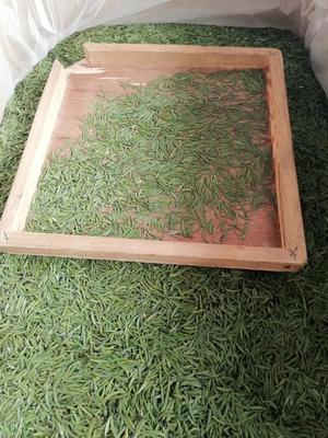 四川省雅安市雨城区高山绿茶 特级 礼盒装