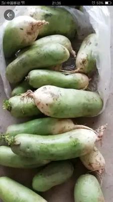 这是一张关于青头白萝卜 2~2.5斤 的产品图片