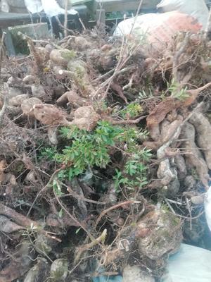 这是一张关于景观盆栽 的产品图片