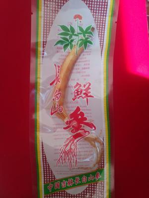 吉林省通化市集安市园参 鲜参