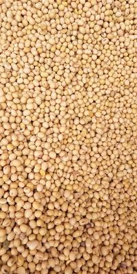 甘肃省陇南市徽县黄大豆  1等品 生大豆 毛粮,净粮,价格面议。