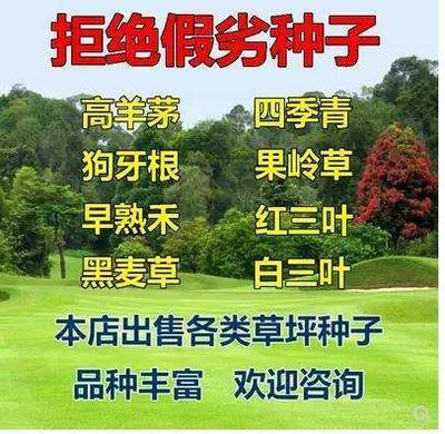 这是一张关于草坪种子  四季青狗牙根果岭草各种草坪种子的产品图片