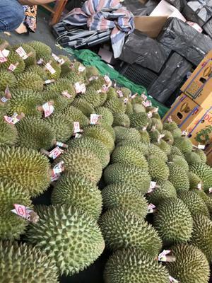 这是一张关于泰国甲仑榴莲 3 - 4公斤 60 - 70%以上 的产品图片