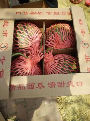 山东省临沂市沂水县冠龙西瓜 8斤打底 8成熟 1茬 有籽