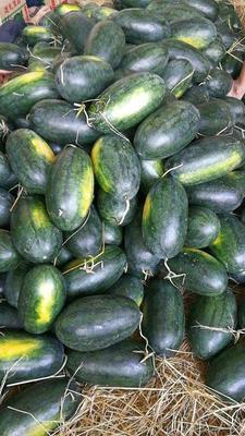 河北省邯郸市丛台区黑美人西瓜 7斤打底 9成熟 1茬 有籽