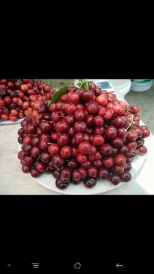 这是一张关于大樱桃 20mm以上 5-8g 的产品图片