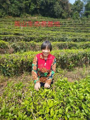 青海省西宁市城东区云南绿茶 一级 袋装