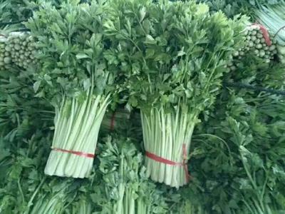 这是一张关于西芹 50~55cm 1.5~2.0斤 露天种植 的产品图片
