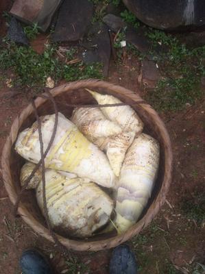 这是一张关于楠竹笋 鲜笋 的产品图片