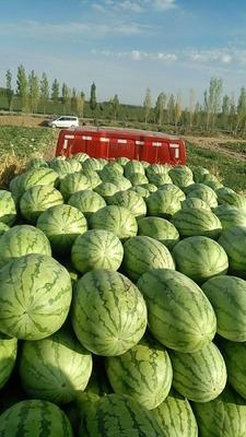 新疆维吾尔自治区昌吉回族自治州昌吉市金城5号西瓜 10斤打底 9成熟 1茬 有籽