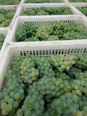 这是一张关于水晶葡萄 0.4-0.6斤 5%以下 1次果 的产品图片