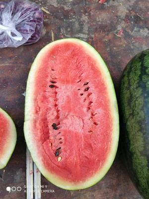 河北省邯郸市丛台区黑美人西瓜 6斤打底 9成熟 1茬 有籽