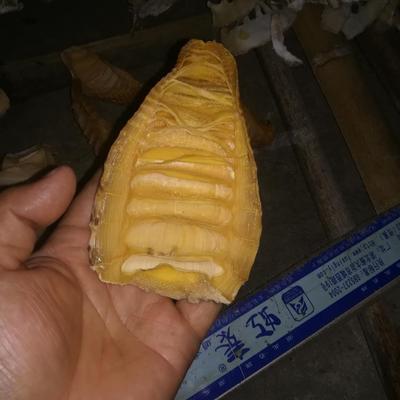 广西壮族自治区桂林市兴安县竹笋干 散装 1年以上