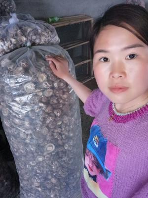 湖北省十堰市郧阳区花菇 干香菇 4cm~6cm 春菇