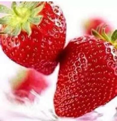 这是一张关于白草莓 10~20公分 穴盘苗 的产品图片