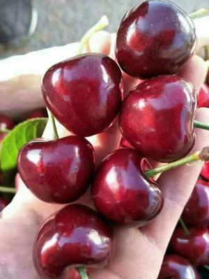 这是一张关于美早樱桃 28-30mm 12-15g 的产品图片