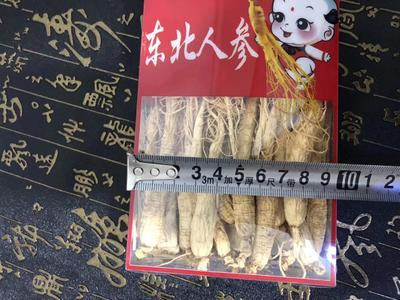 这是一张关于园参 全须生晒参 的产品图片