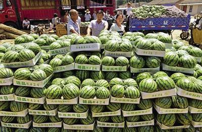 河南省周口市太康县8424西瓜 6斤打底 8成熟 1茬 有籽