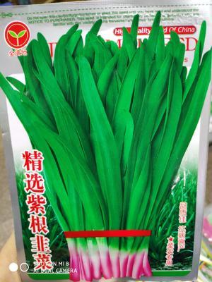 四川省成都市成华区韭菜种子 袋装