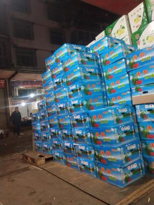 湖南省长沙市雨花区麒麟西瓜 6斤打底 9成熟 1茬 无籽