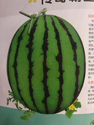 辽宁省铁岭市昌图县传奇农业 7斤打底 9成熟 1茬 有籽