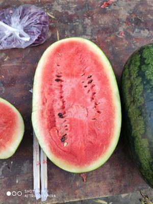 这是一张关于黑美人西瓜 4斤打底 7成熟 2茬 有籽 的产品图片