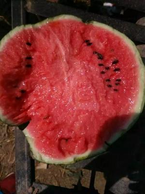 山东省临沂市沂水县甜王西瓜 6斤打底 8成熟 1茬 有籽