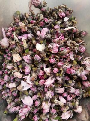这是一张关于桃花 茶的产品图片
