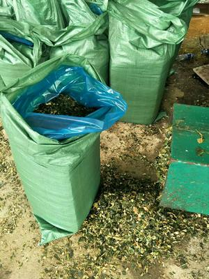 这是一张关于玉米青贮草 的产品图片