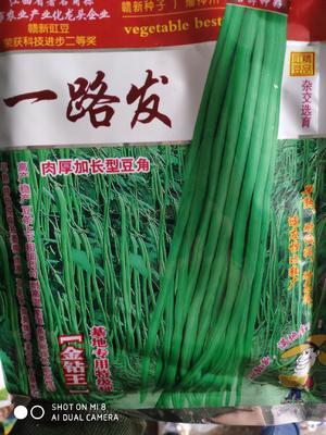 这是一张关于长青豆角种子 ≥90% 的产品图片