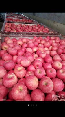 这是一张关于红富士苹果 75mm以下 表光 纸袋 的产品图片