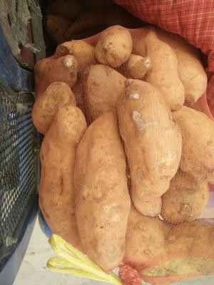 河北省石家庄市灵寿县北京553红薯 6两~1斤 黄皮