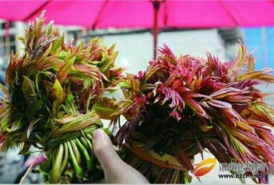 安徽省阜阳市太和县红香椿芽 6cm以下
