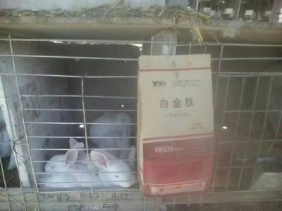 这是一张关于兔饲料  2天见效改善皮毛光泽催肥抗应激的产品图片