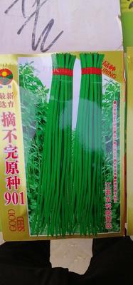 河南省商丘市睢阳区长青豆角种子 ≥99%