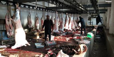 这是一张关于羊肉类 生肉 的产品图片
