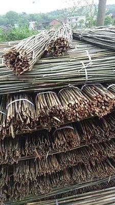 这是一张关于架菜竹 的产品图片