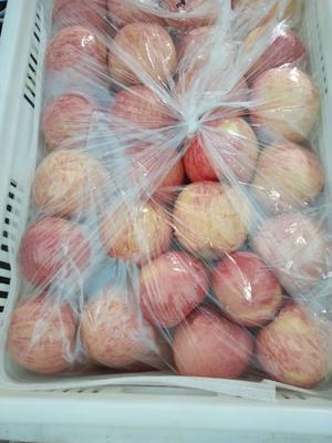 山东省烟台市栖霞市红富士苹果 85mm以上 条红 纸袋