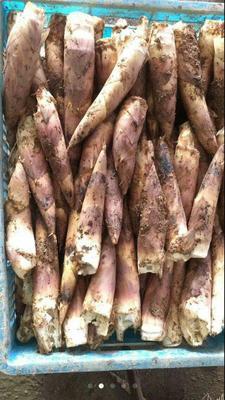 这是一张关于小竹笋 鲜笋 的产品图片