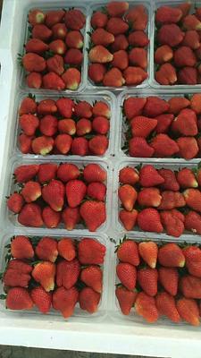 江苏省徐州市贾汪区奶油草莓 30克以上