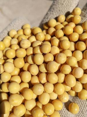黑龙江省绥化市北林区黑龙江大豆 生大豆 1等品