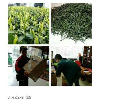这是一张关于恩施富硒绿茶 特级 散装 的产品图片