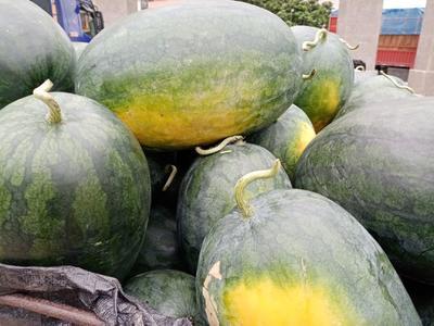 广东省阳江市阳西县黑美人西瓜 7斤打底 8成熟 1茬 有籽
