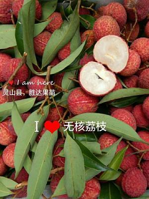 这是一张关于无核荔枝苗 的产品图片