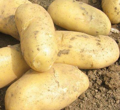 这是一张关于早大白土豆 2两以上 的产品图片